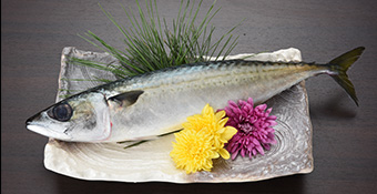 mackerel_img02.jpg
